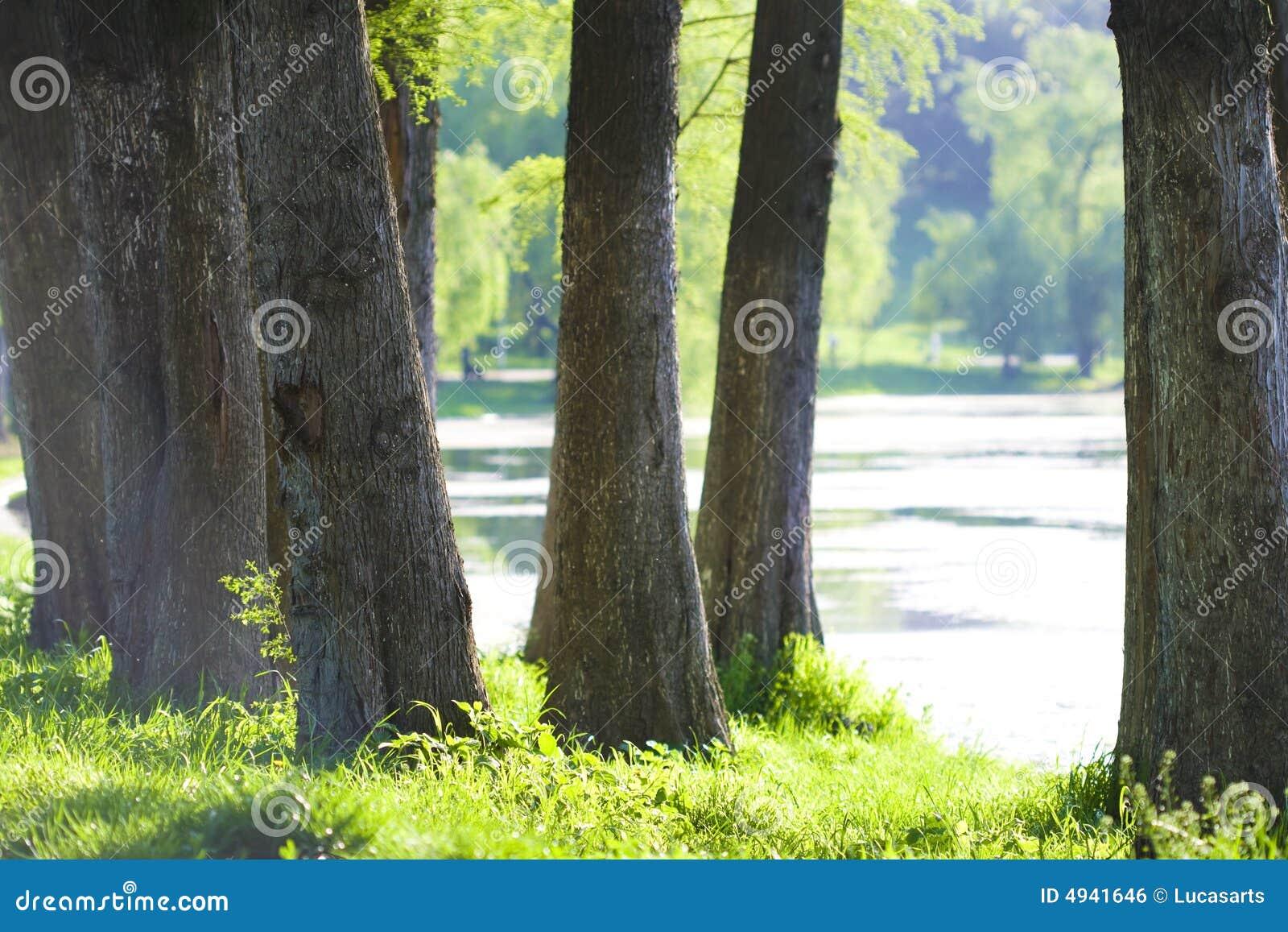 Lago e natureza