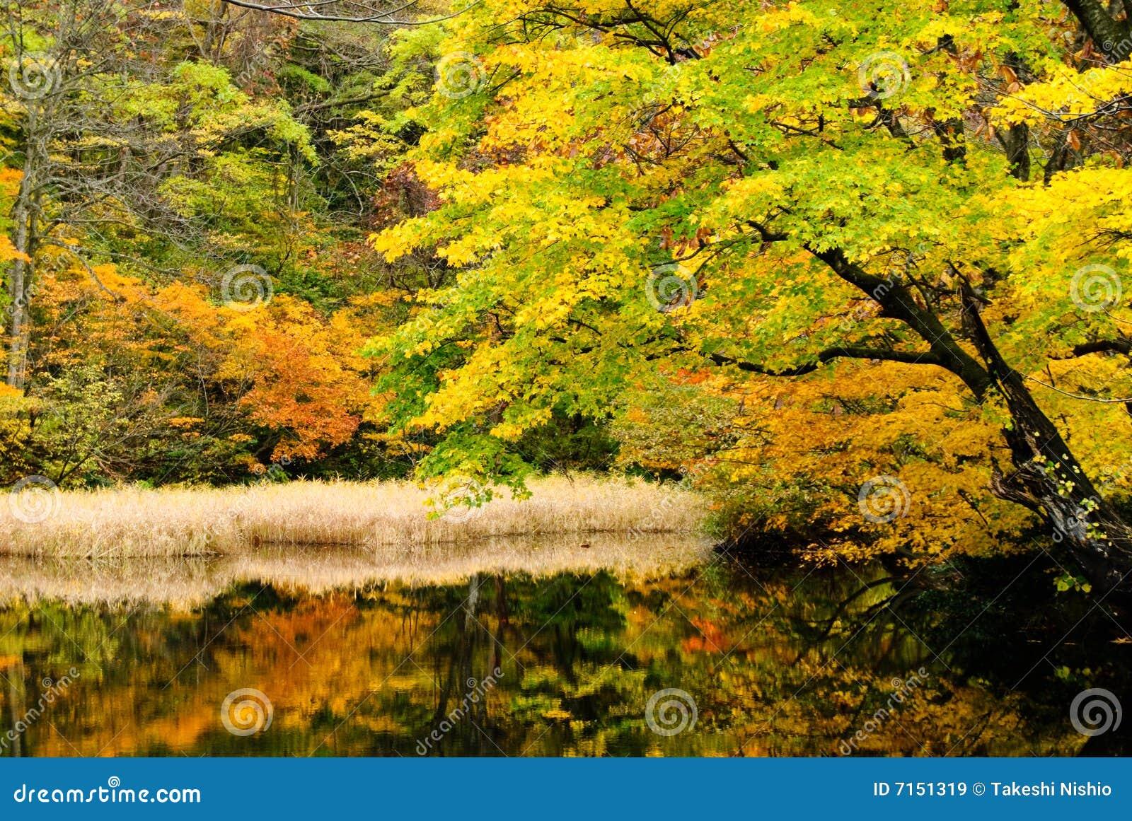 Lago en bosque profundo