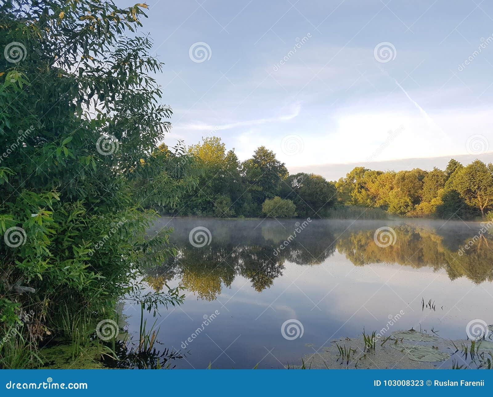 Lago en el bosque