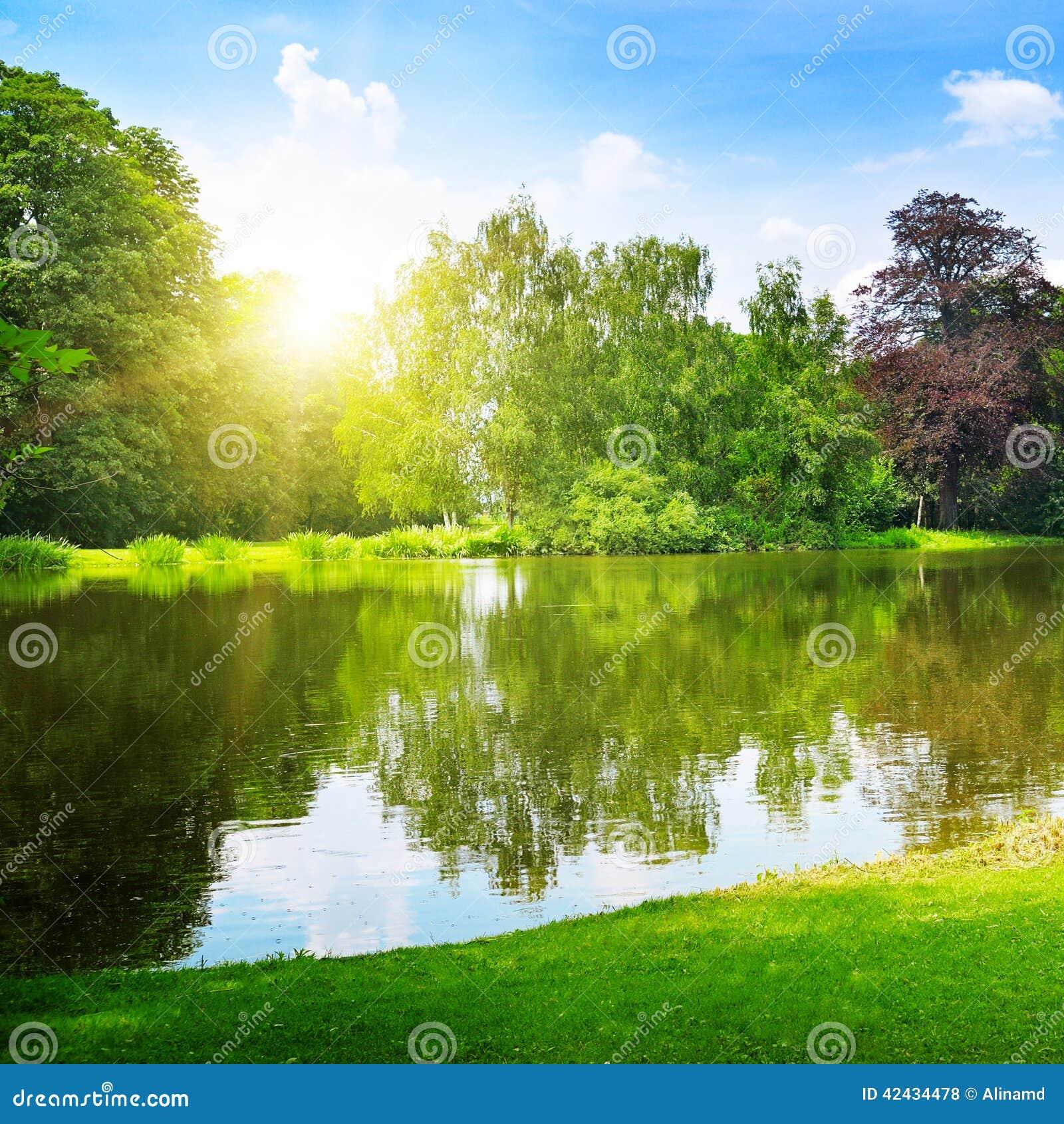 Lago en el parque del verano