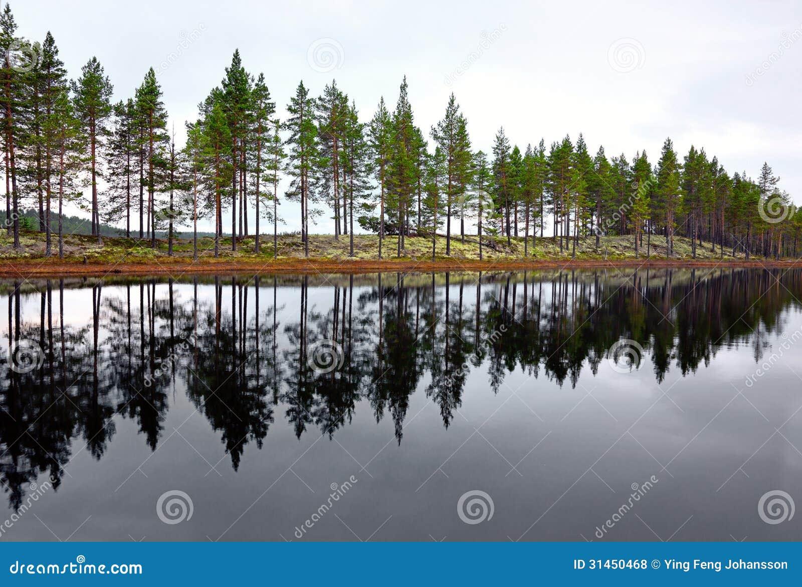 Lago escandinavo com coníferas