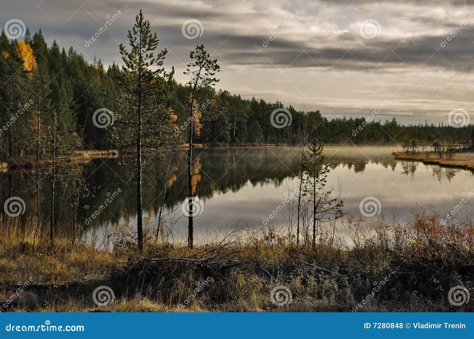 Lago forest