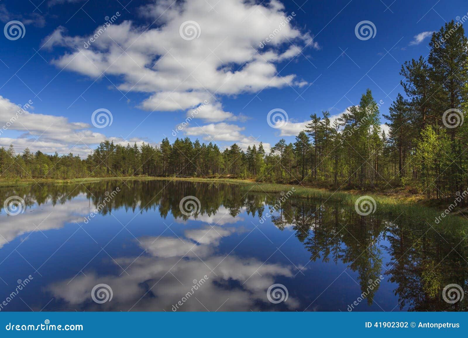 Lago forest debajo del cielo azul