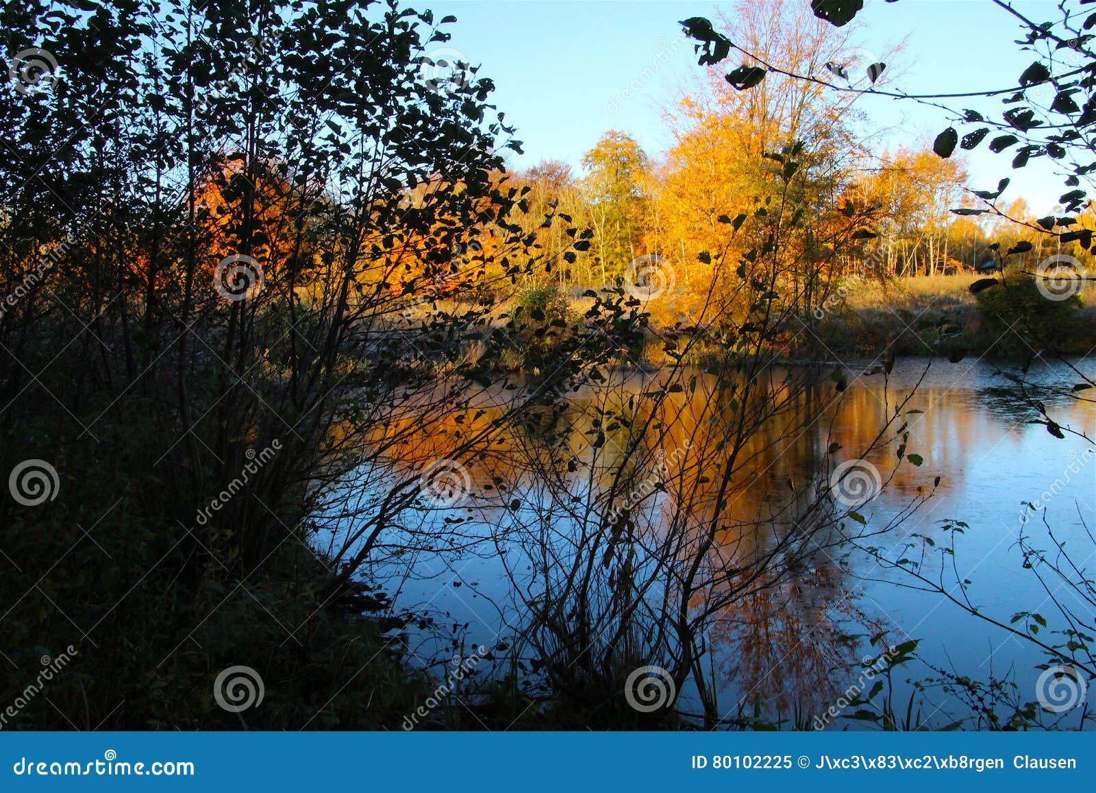 Lago forest em cores do outono