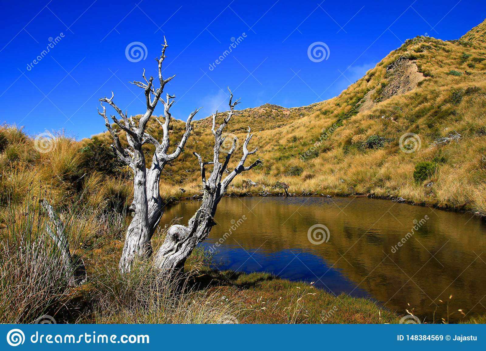 Lago Hikurangi da montagem, Nova Zelândia