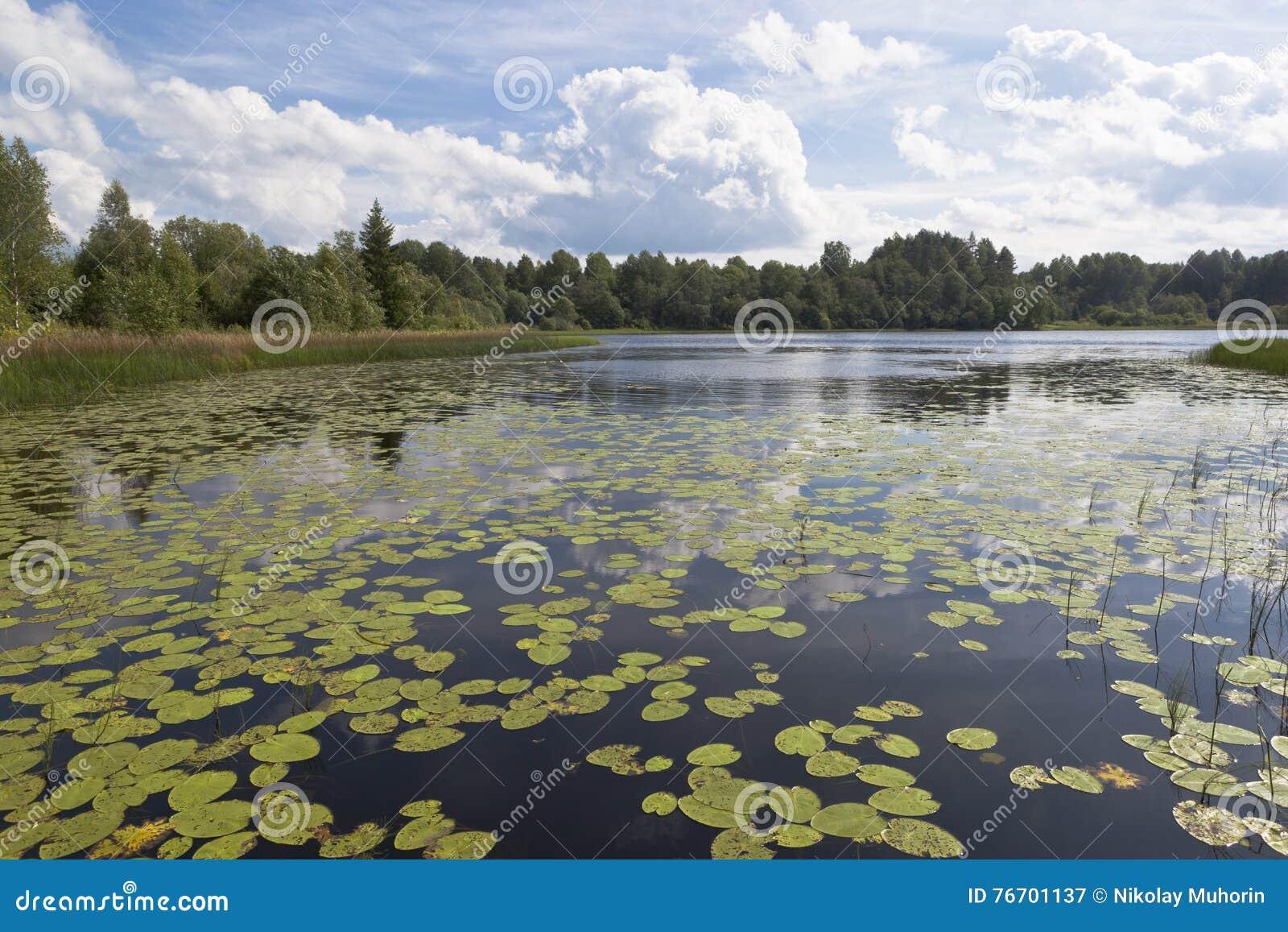 Lago Ilinskoe en el norte ruso en el distrito de Kirillov, región de Vologda, Rusia del parque nacional