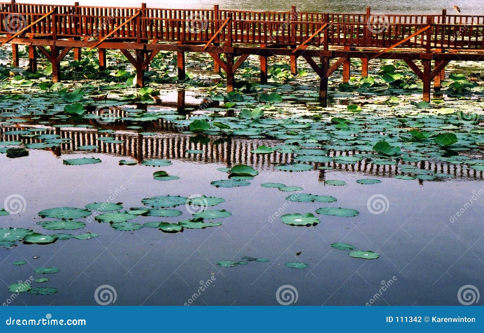 Lago Kandawgyi, Yangon