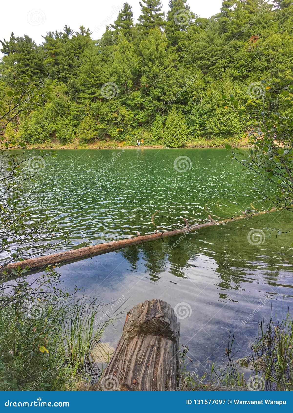 Lago, ma verde rosa