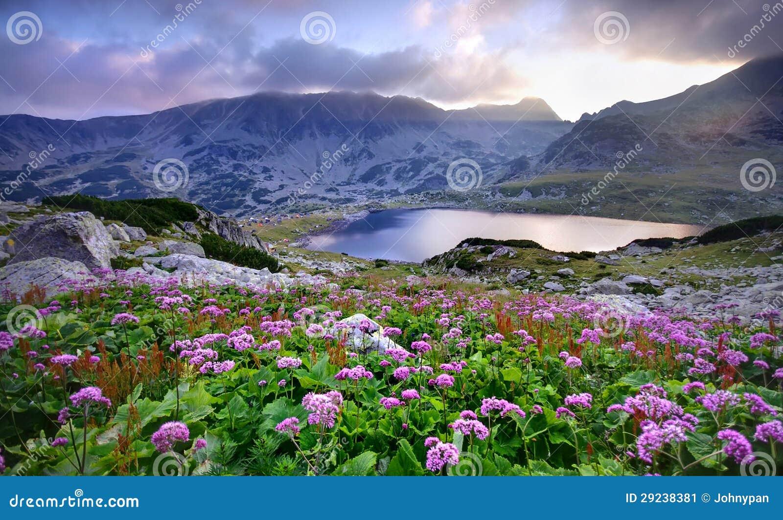 Download Lago Na Montanha E Nas Flores Imagem de Stock - Imagem de colorido, nuvens: 29238381