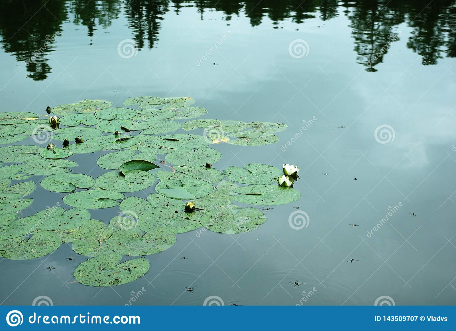 Lago Ninfee