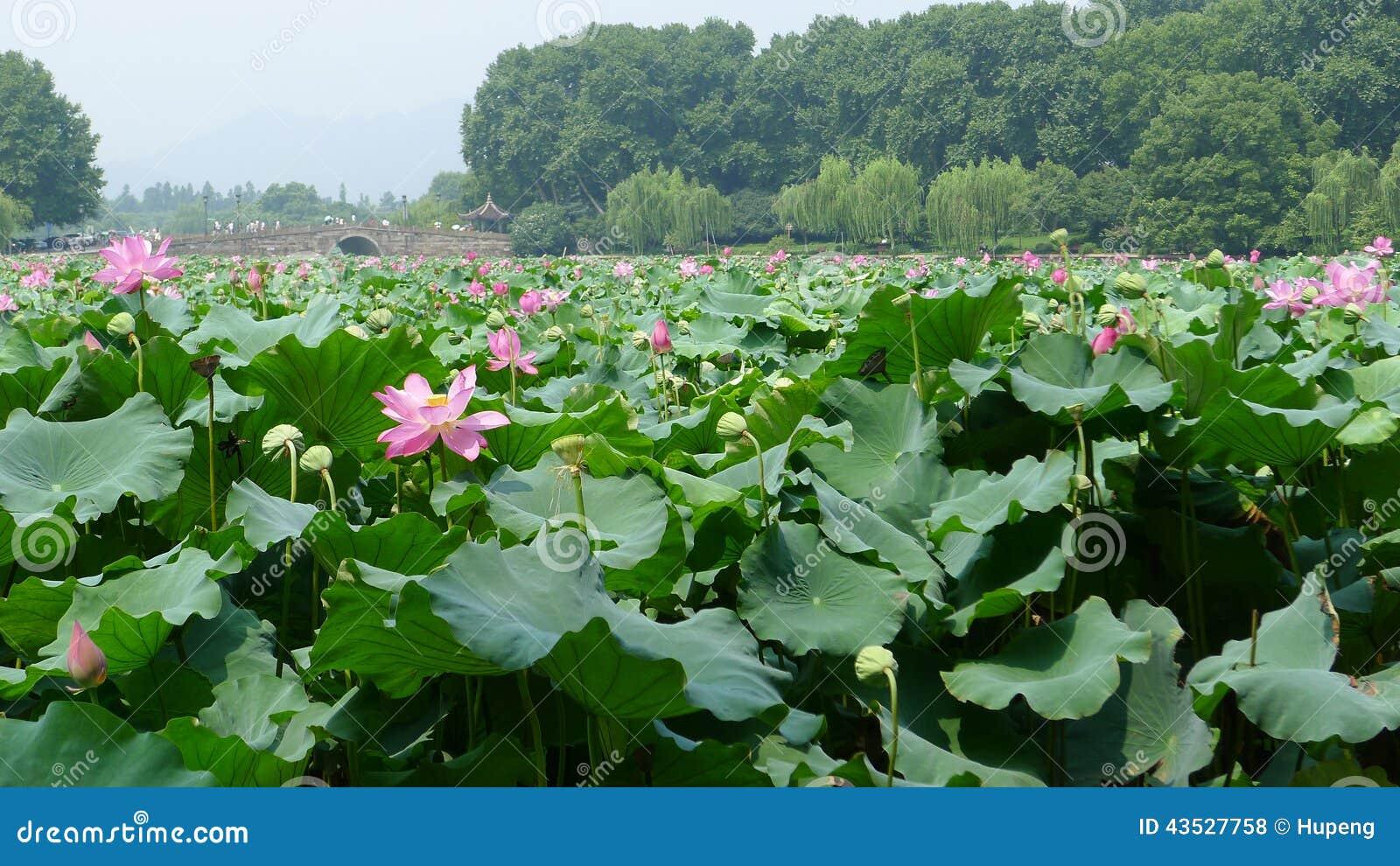 Lago ocidental Hangzhou
