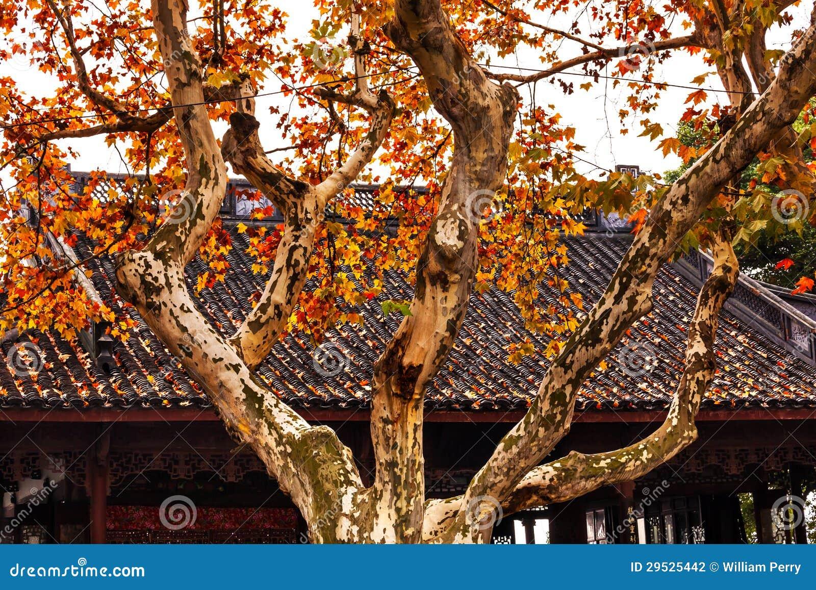 Lago ocidental Hangzhou China roof chinês antigo da casa