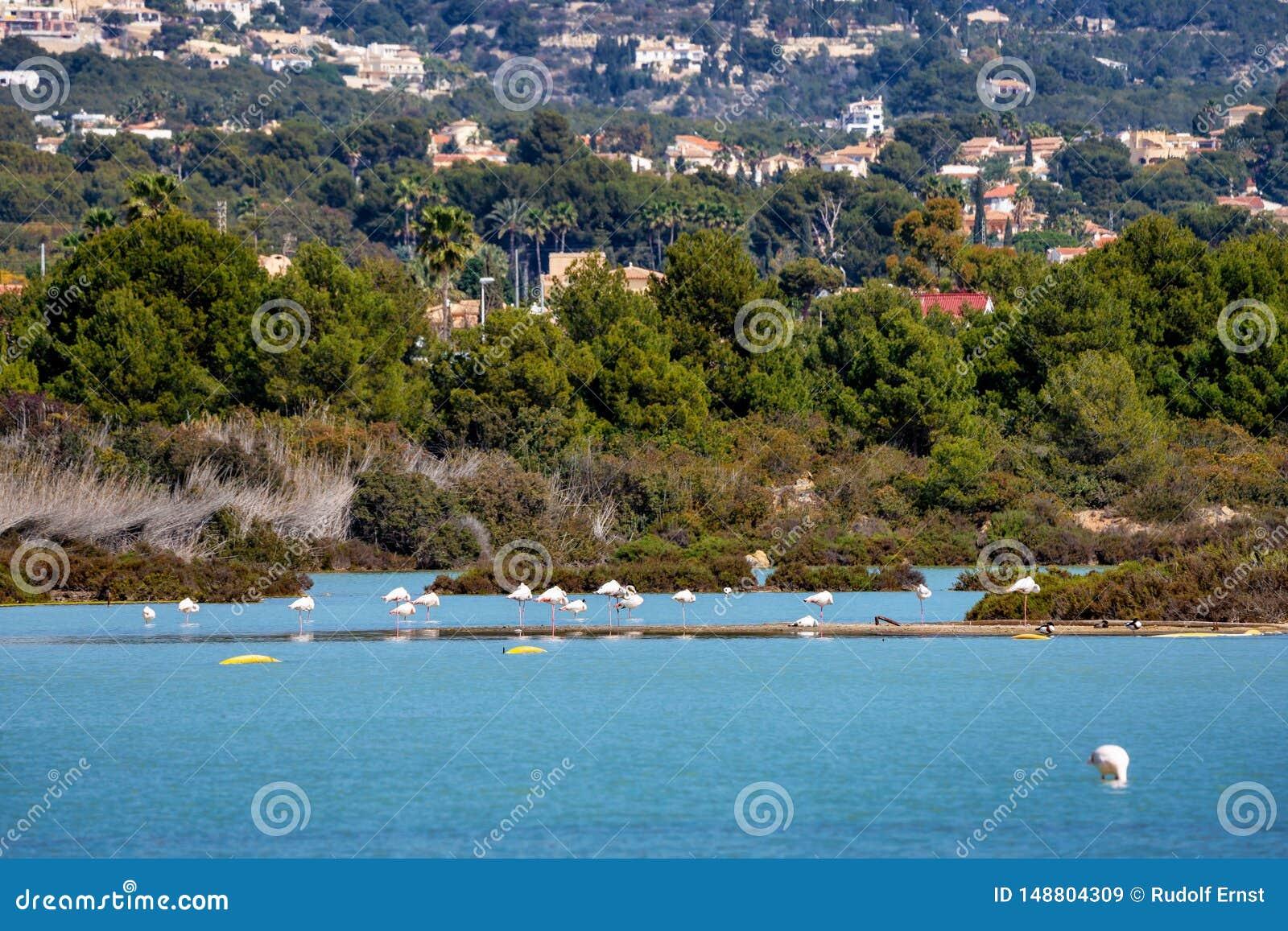 Lago Salinas de Las em Calpe, Espanha com alguns flamingos