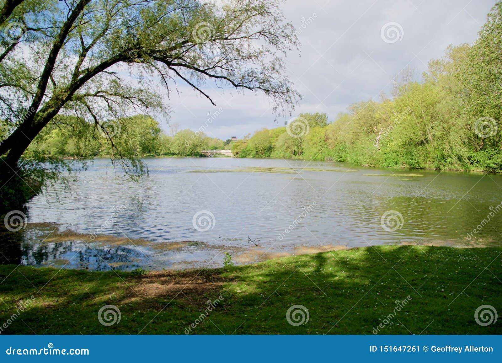 Lago trees ed il paesaggio