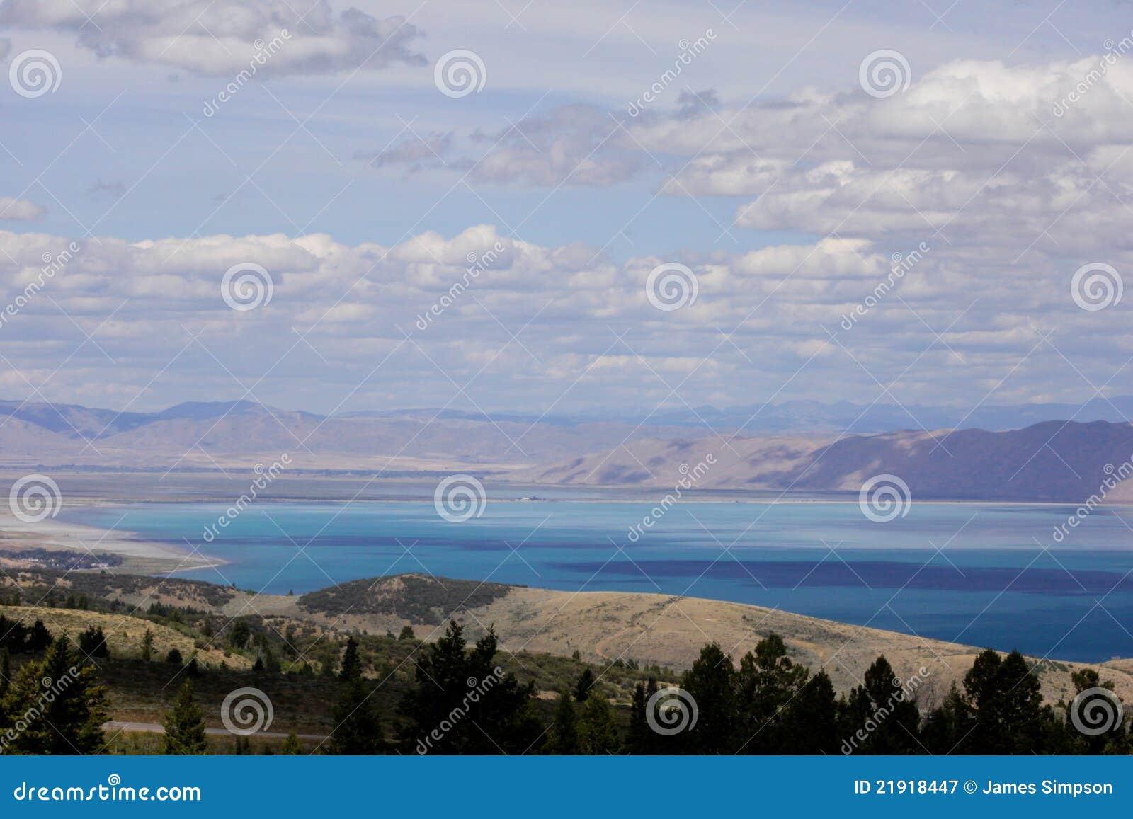 Lago Utah bear