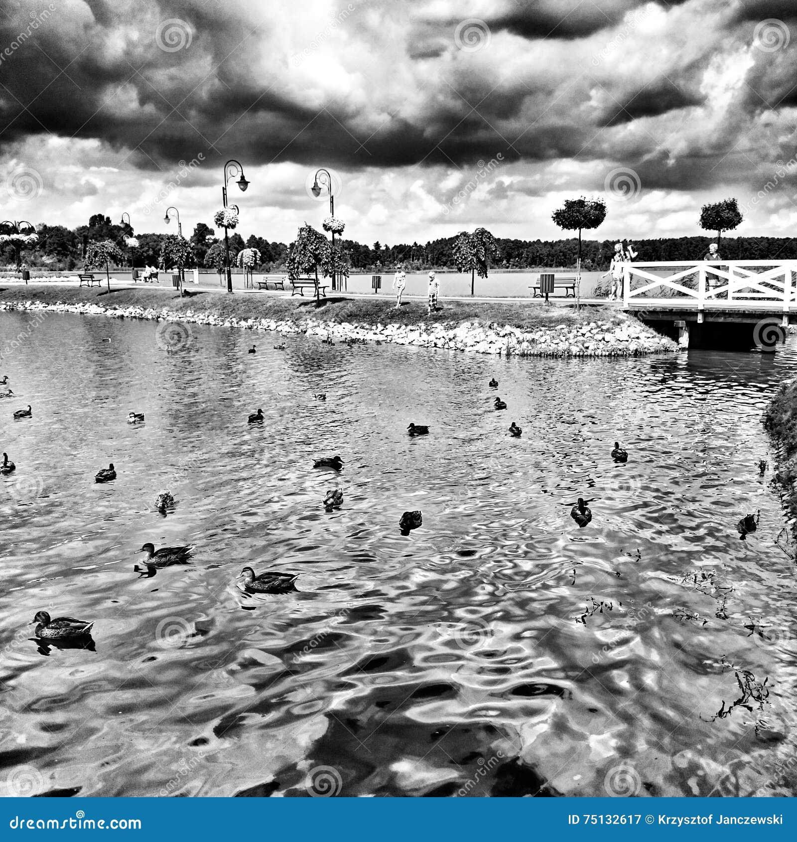 Lago Wolsztyn Mirada artística en blanco y negro