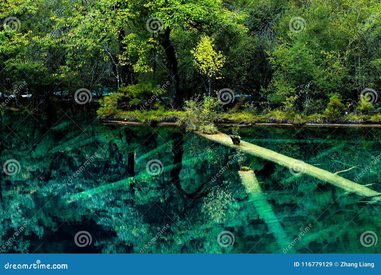 Lago y árboles en el valle Jiuzhaigou, Sichuan, China