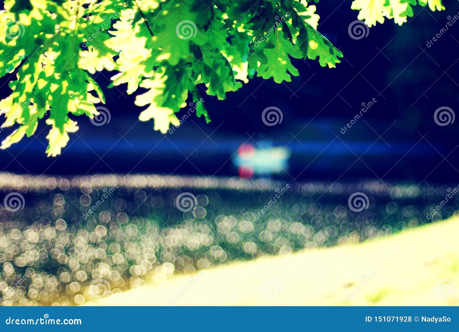Lagoa borrada do parque com barco, salpicaduras da folha clara, verde do carvalho