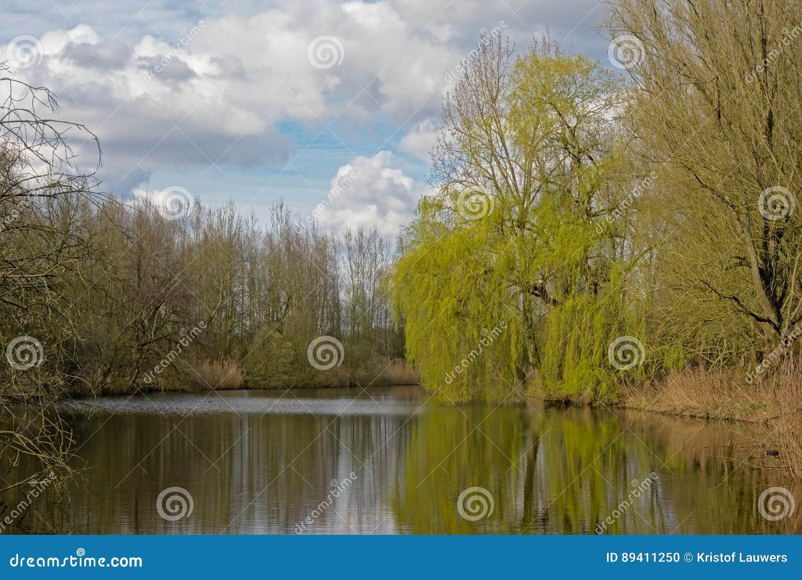 Lagoa com as árvores na natureza flamenga