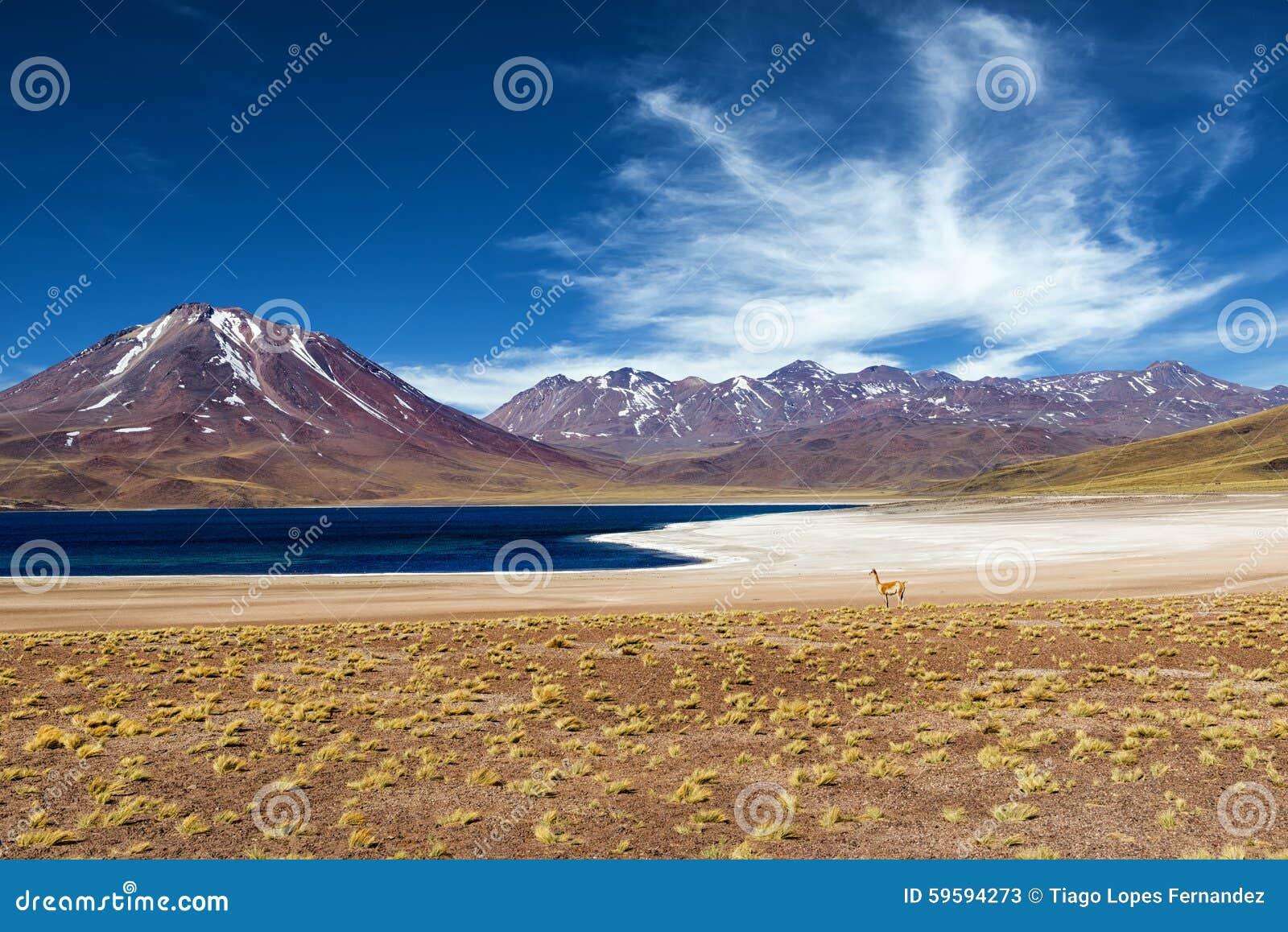 Lagoa de Miscanti no deserto de Atacama