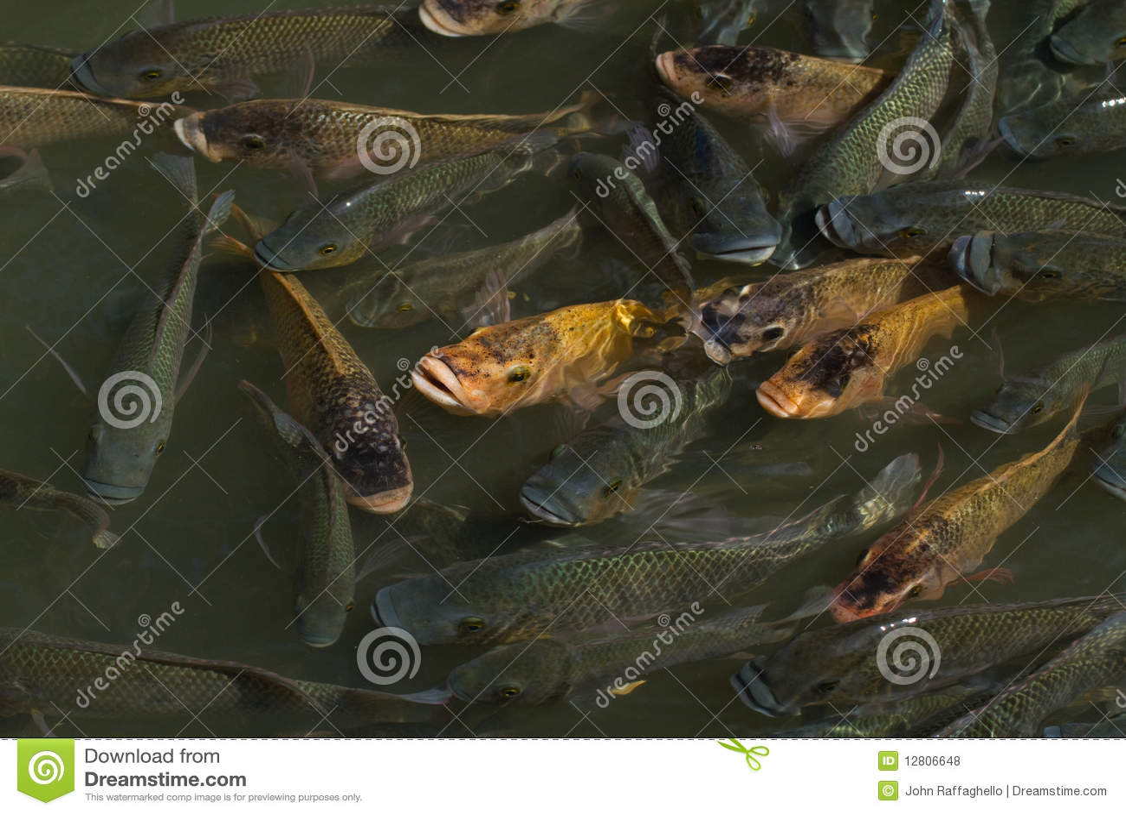 Lagoa de peixes