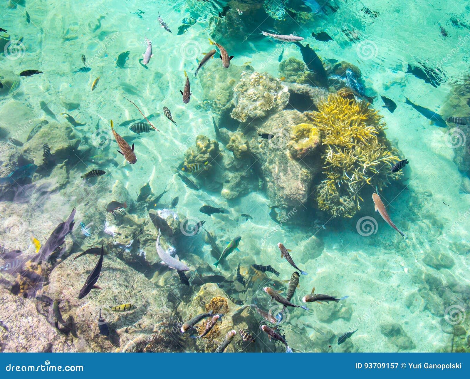 Lagoa de peixes tropical no hotel intercontinental do recurso e dos termas em Papeete, Tahiti, Polinésia francesa
