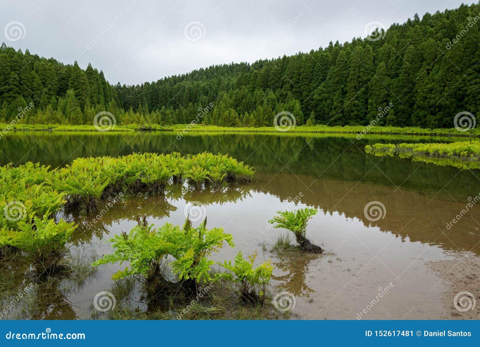 Lagoa do Canári Canary lagune, met bezinning, aquatische groene installaties en bomen