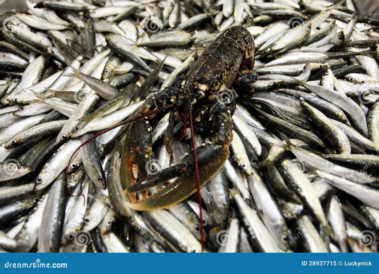 Lagosta no mercado de peixes