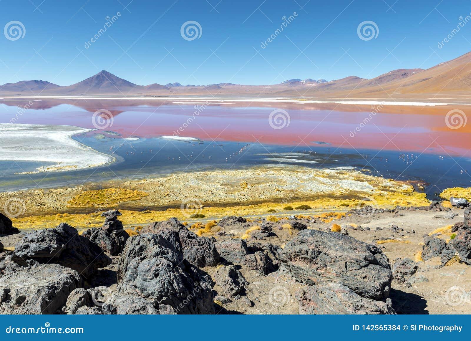 Laguna Colorada dans Uyuni, Bolivie