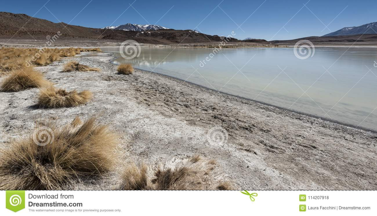 Laguna Honda In English Deep Lagoon Sud Lipez Altiplano Reserva