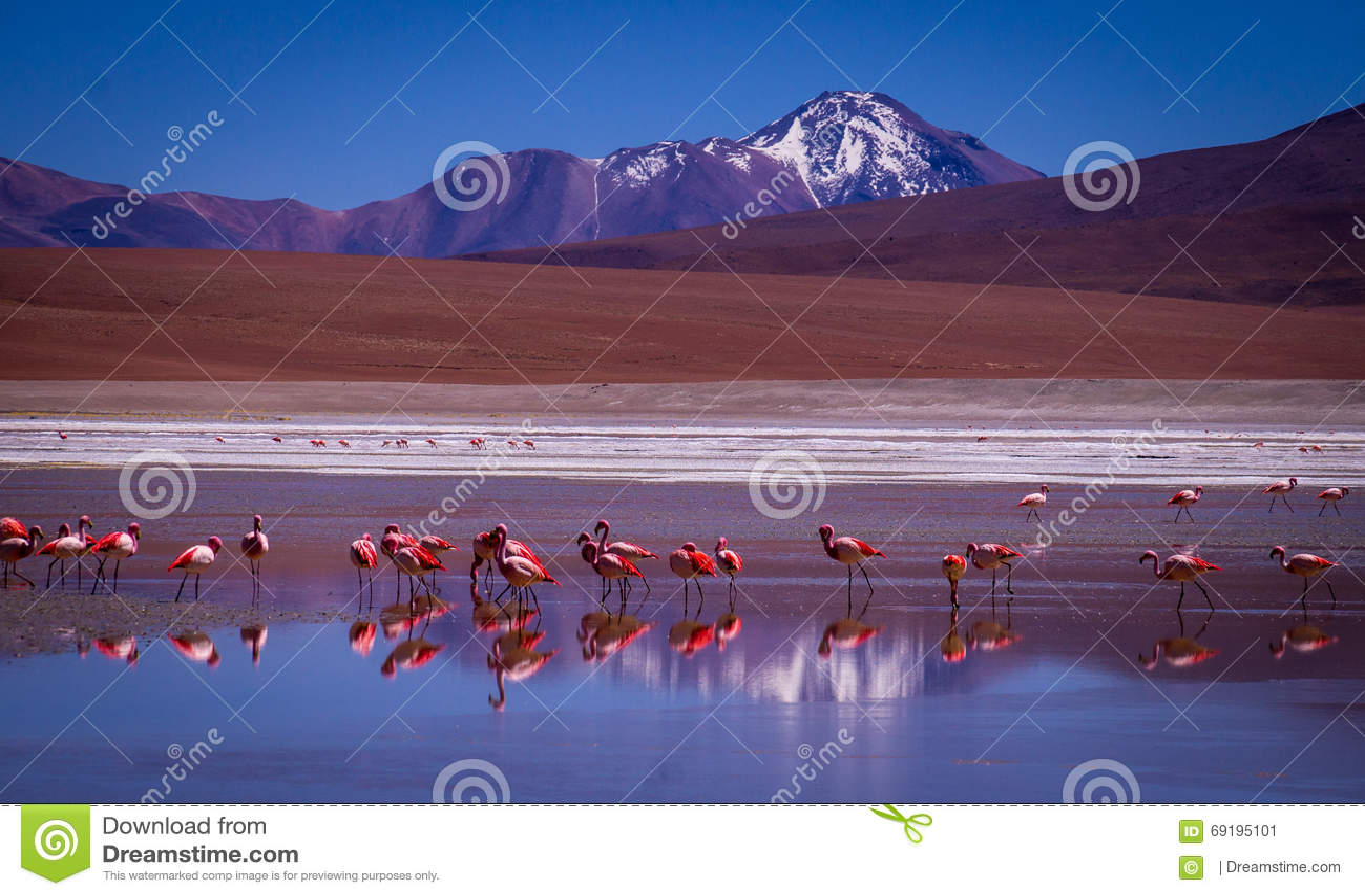 Laguna Kara laguna z flamingami i odbiciem góra