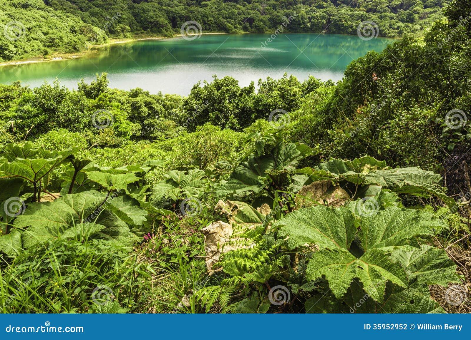 Laguna-Poas azul