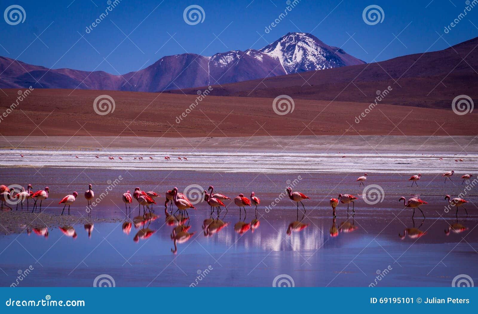 Lagune Lagunas Kara mit Flamingos und Reflexion des Berges