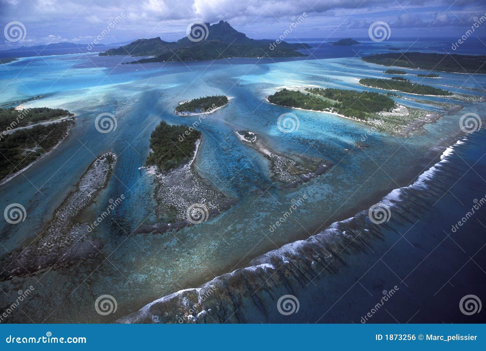 Lagunrevtänder