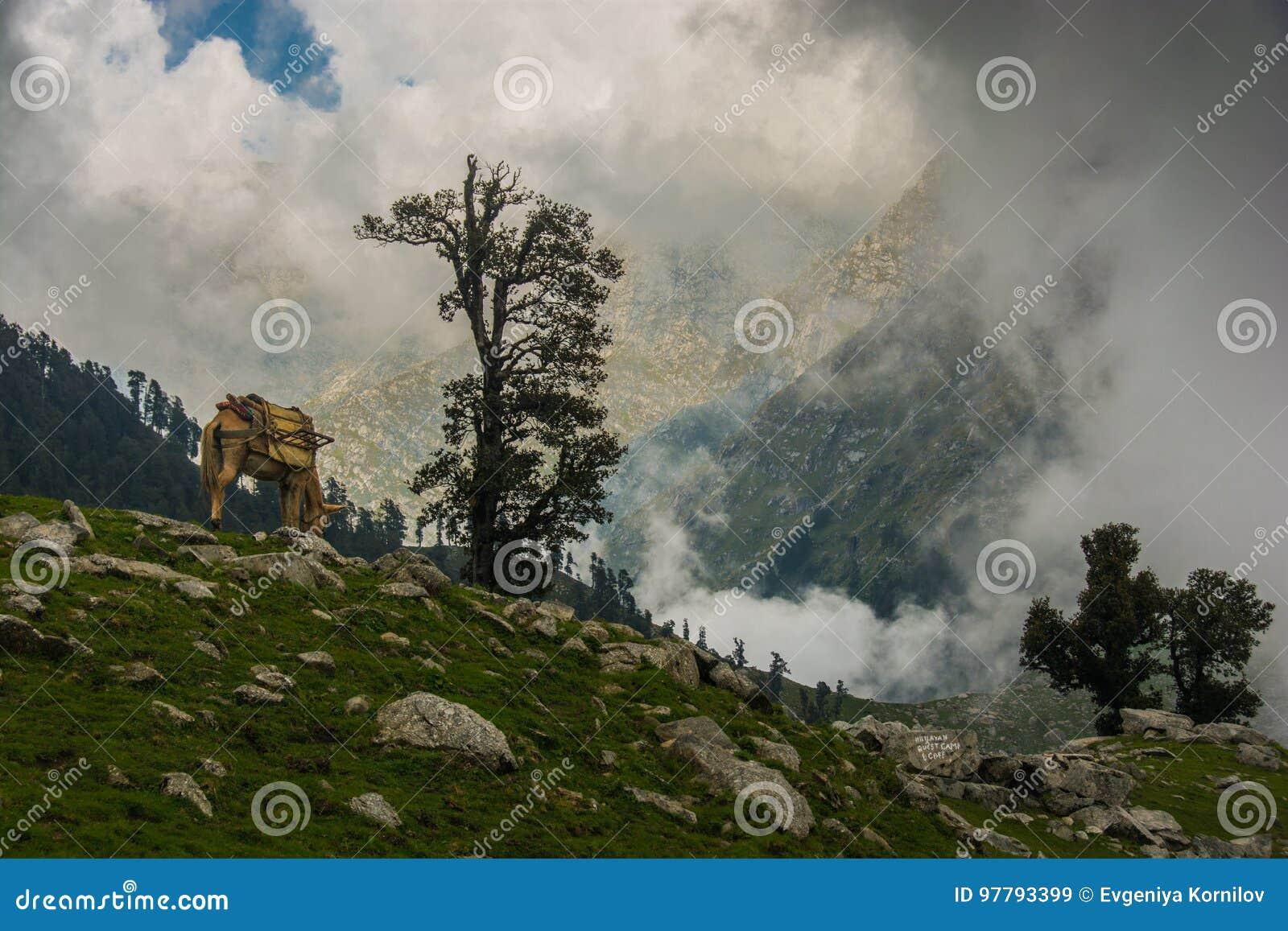 Laka i Himachal Pradesh