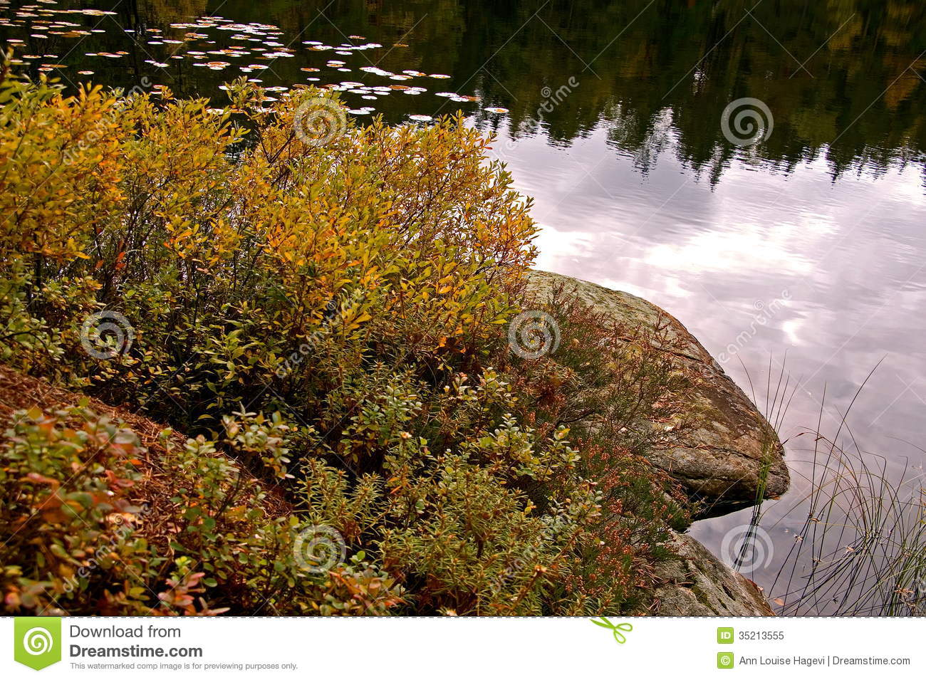 Lake and bog myrtle stock image. Image of autumn, forest ...
