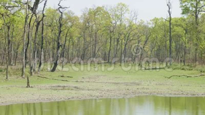 Lake with crocodile in rainforest in the national park Chitwan, Nepal