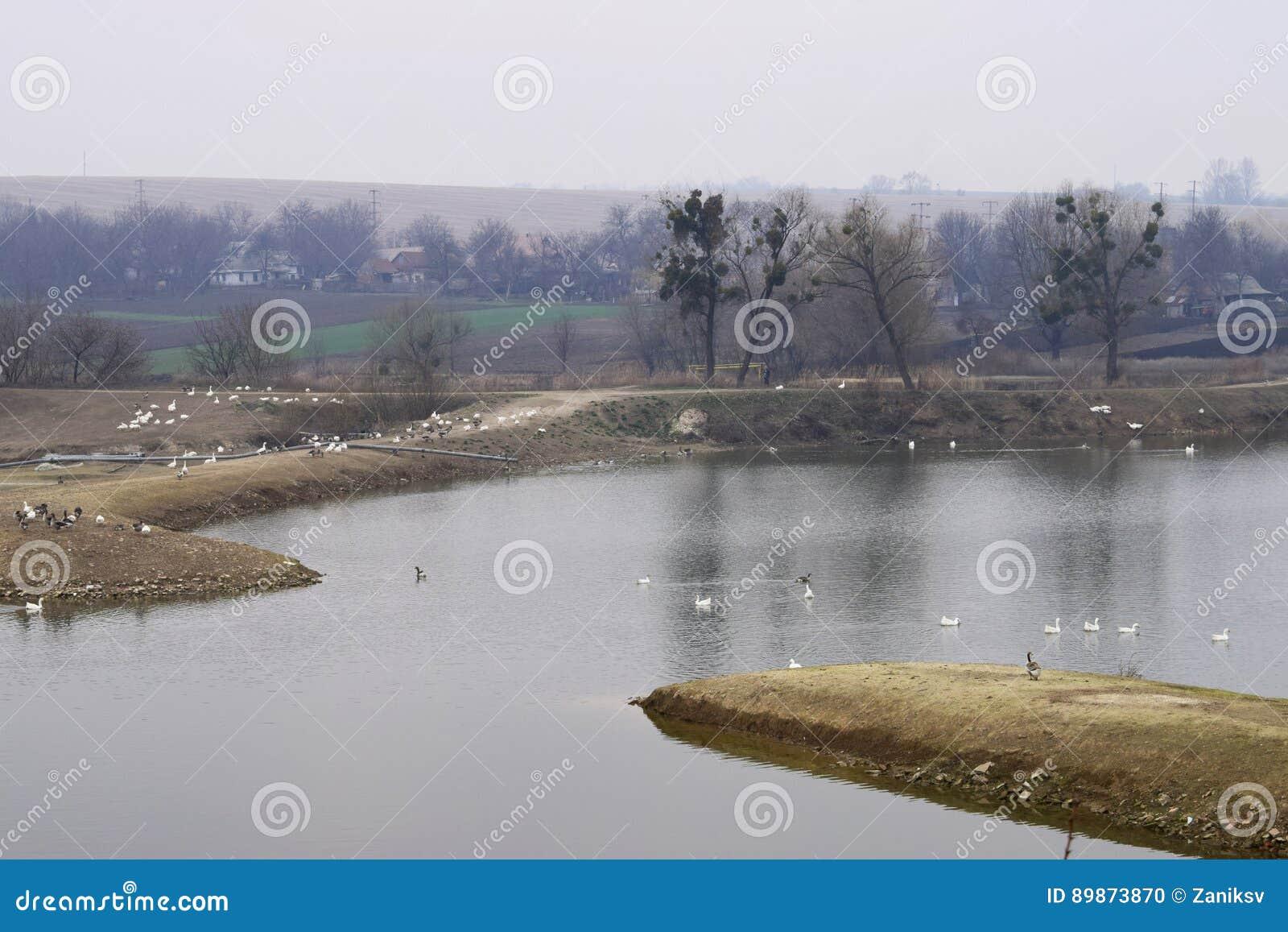 Lake&farm