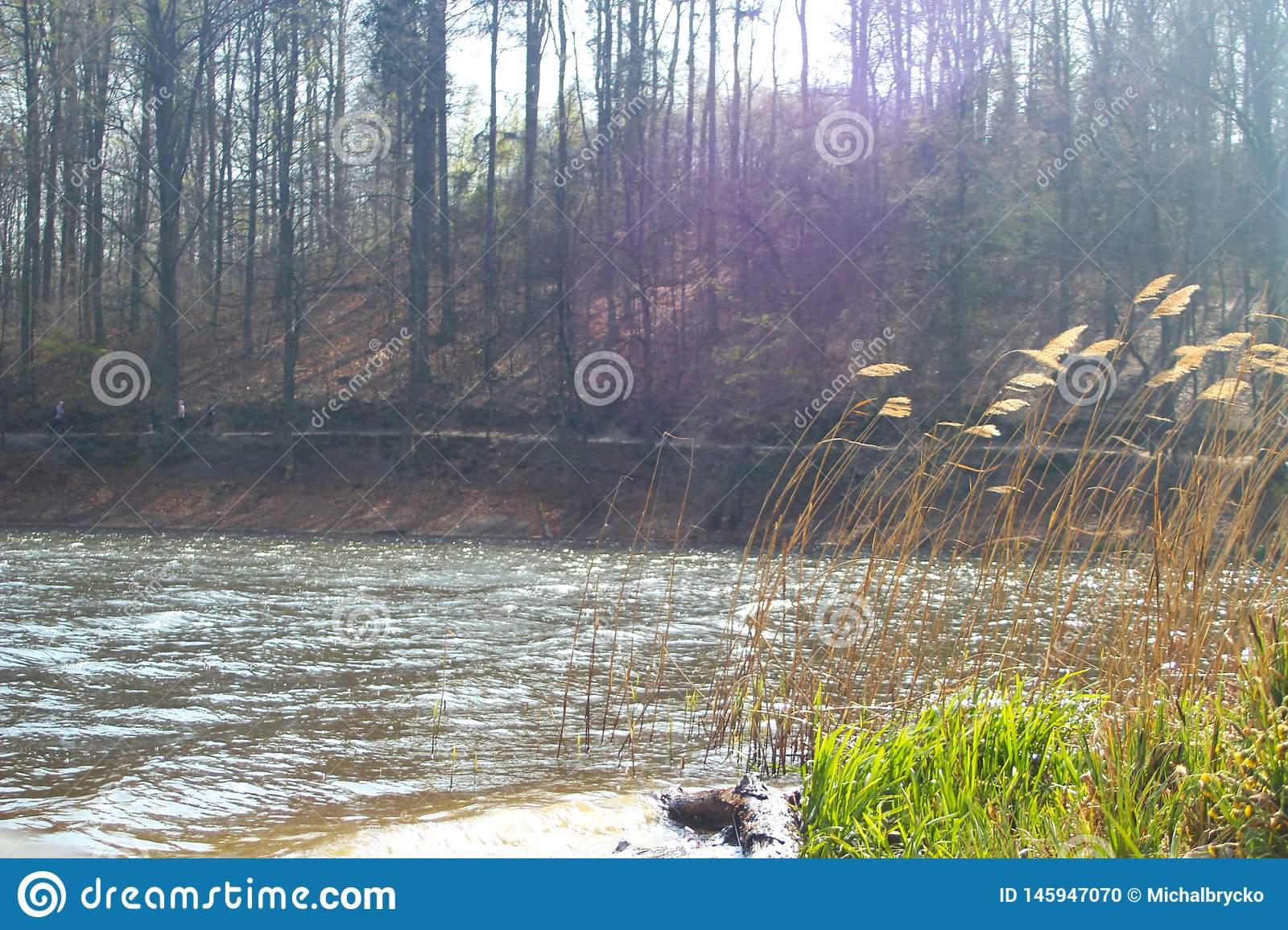 Lake in the forest with slowly rolling grass