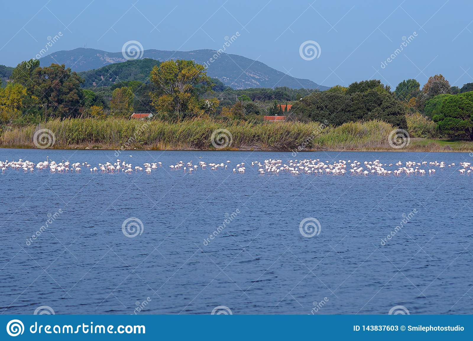 Lake Korission is a very important ecosystem of Corfu, where many migratory birds like pink flamingos stop