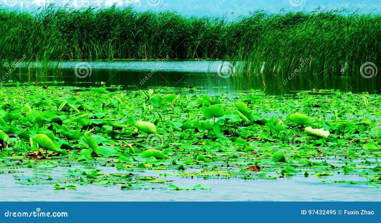 Lake, Lakes,Wetland,Huaiyang east lake