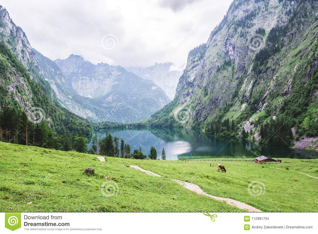 Lake Obersee, Sch nau am Konigssee, Bavaria, Germany. Great alpine scenery with cows in National Park Berchtesgaden.