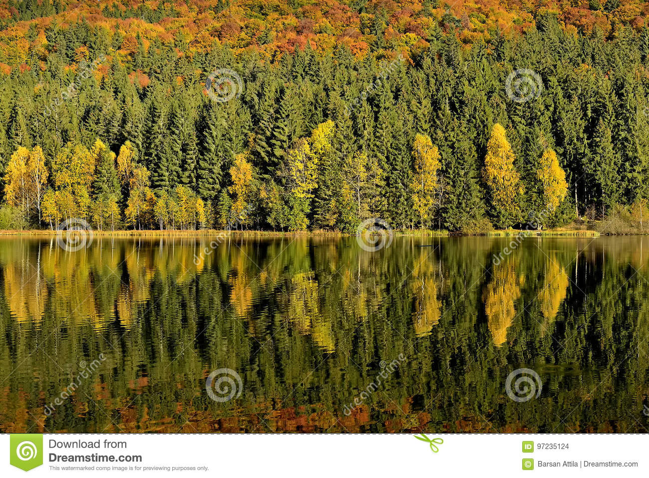 The Lake reflections of fall foliage. Colorful autumn foliage casts its reflection on the calm water