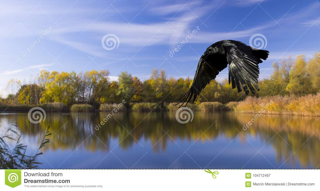 Lake with silhouette of a flying bird - Bedfont Lake Country Park, London