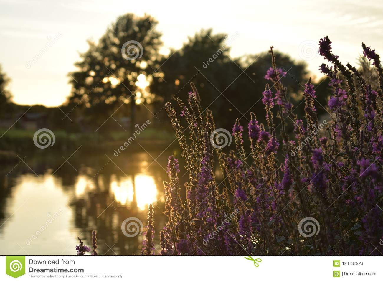 Lake sunset with plants and a blury background