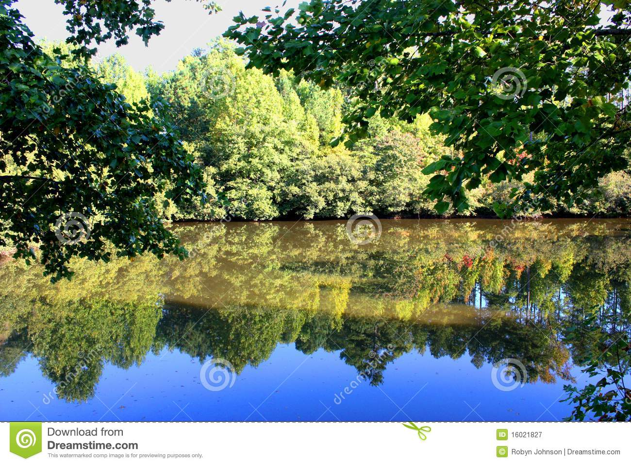 Royalty free stock photography lake trees reflection