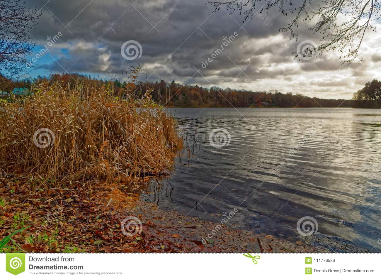 Lake under dramatic cloudy sky and brawn reed in foreground in a winter