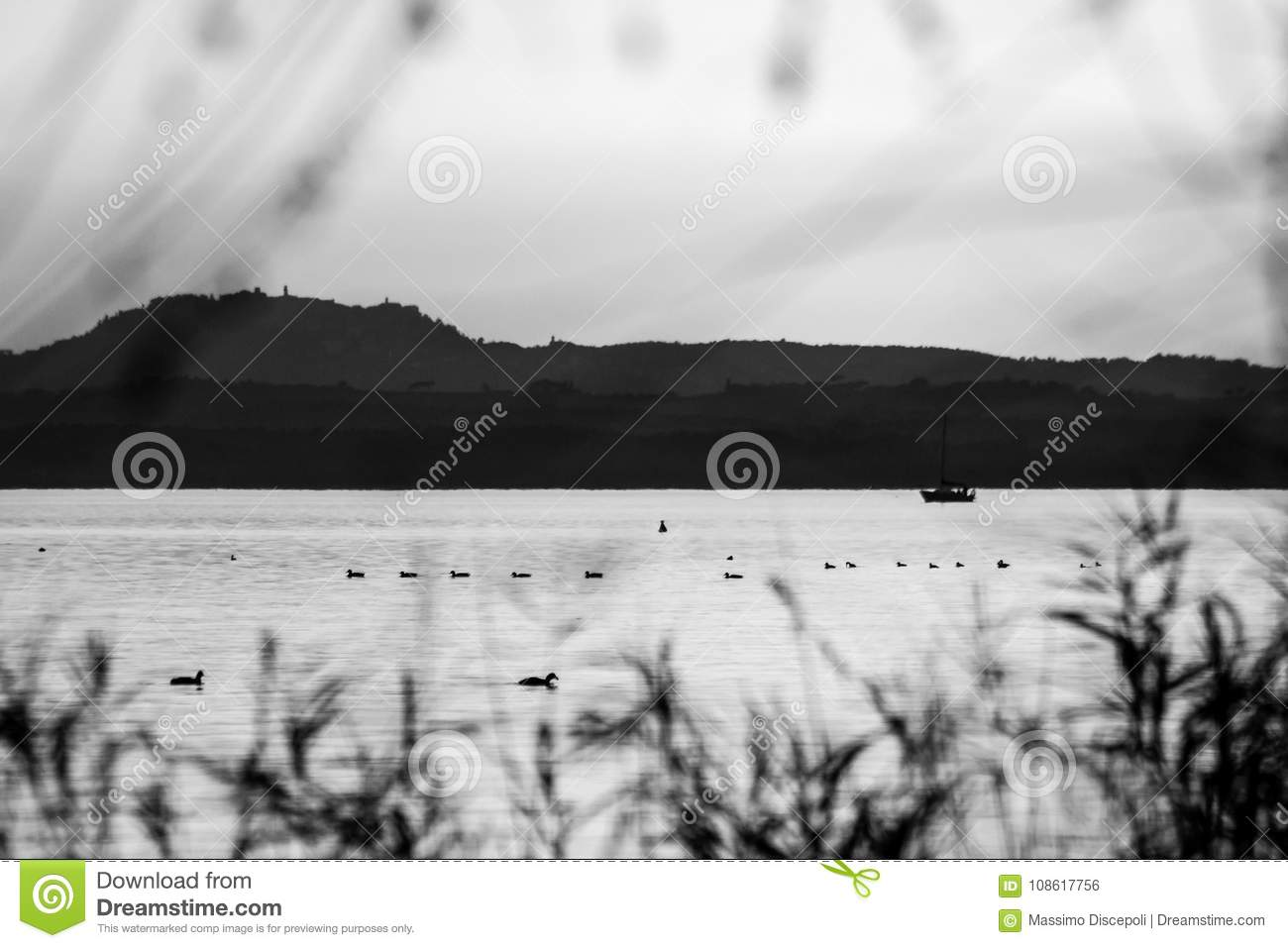 A Lake View With Boat And Birds On Water, And Out Of Focus Plants ...