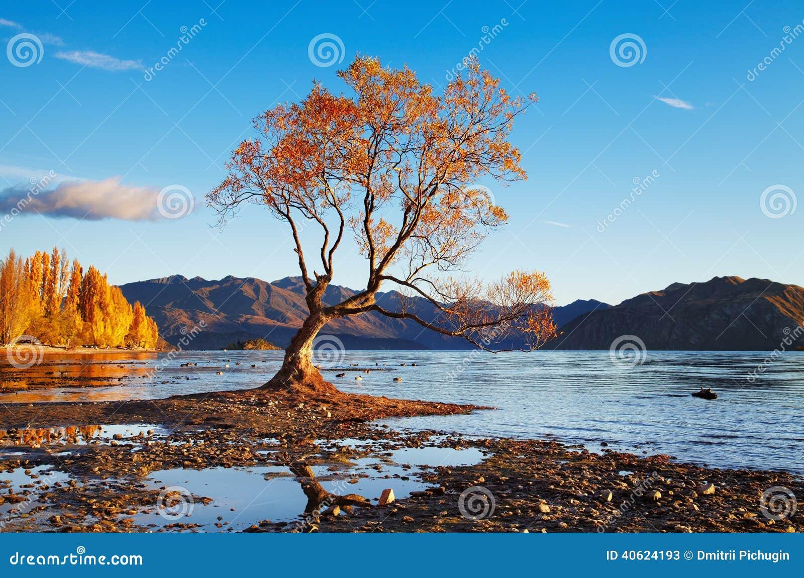 New Zealand Time Image: Lake Wanaka, New Zealand Stock Image. Image Of Beach