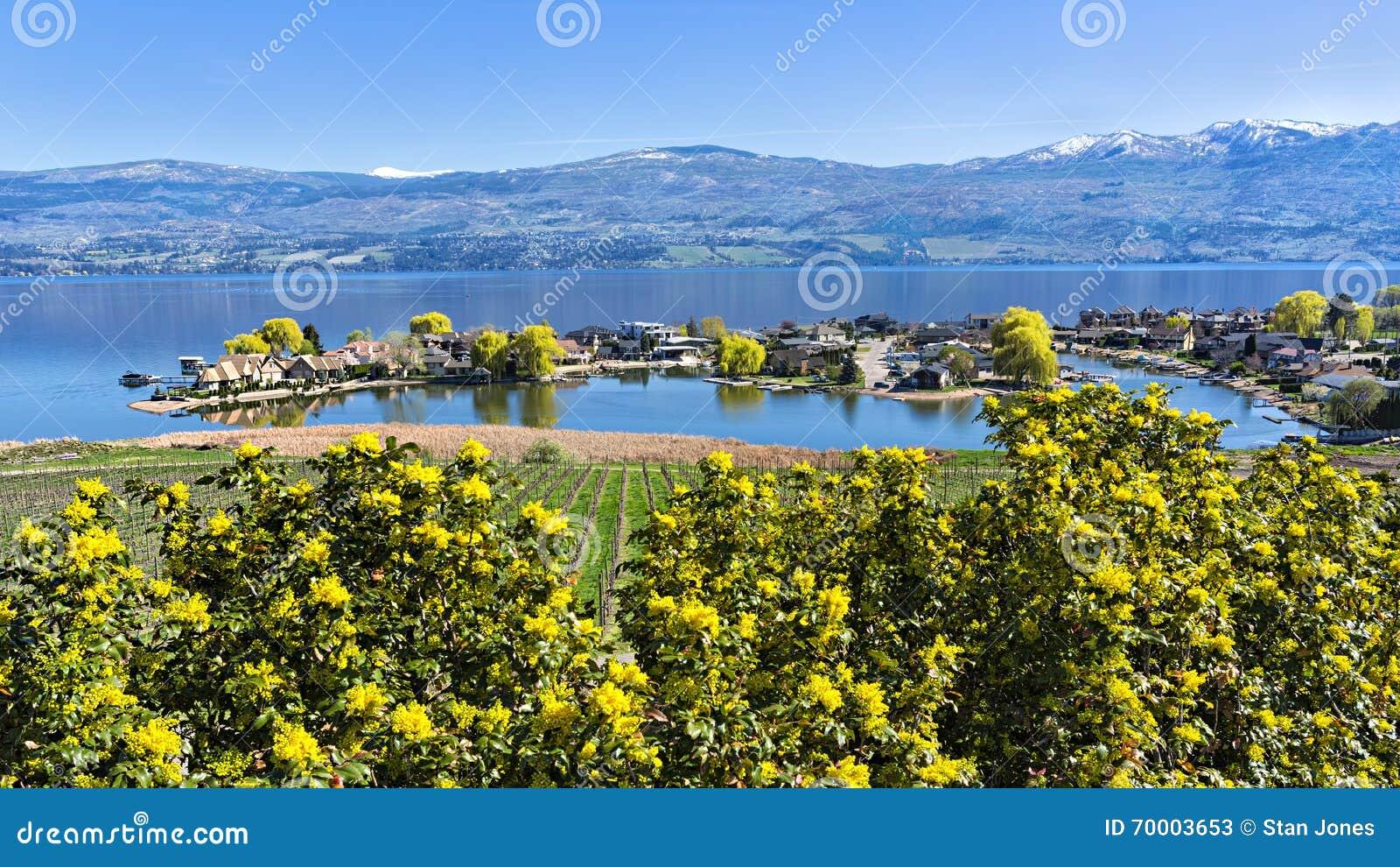 Lakefrontindelning i underavdelningar på Okanagan sjön västra Kelowna British Columbia Kanada